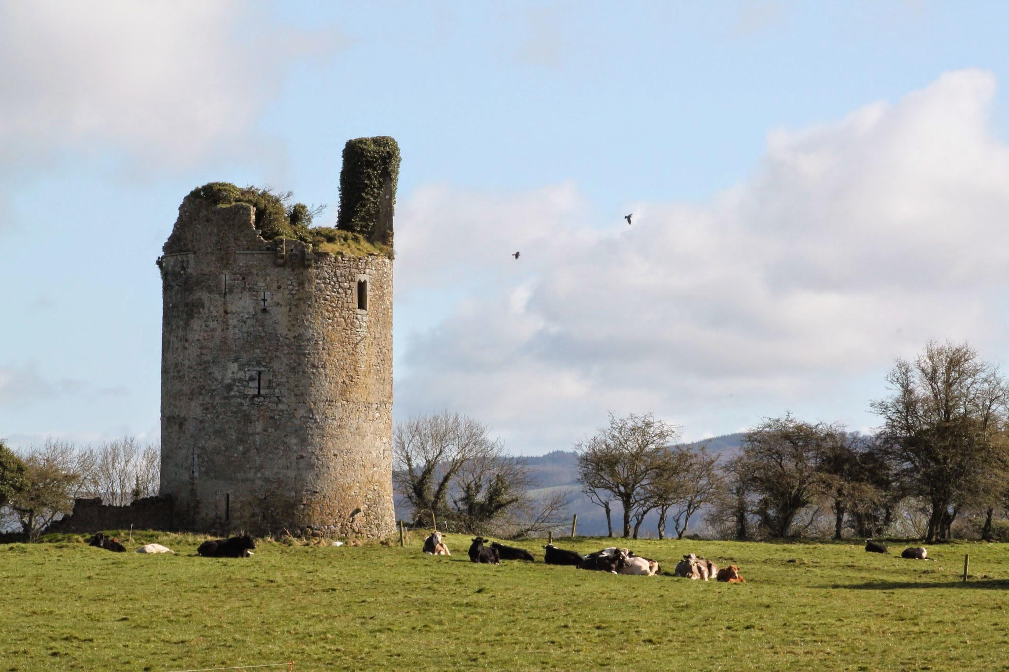 CastleInField
